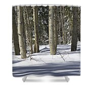 Birch Trees In Snow Shower Curtain