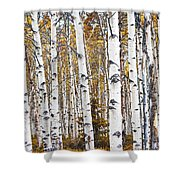 Birch Trees No.0644 Shower Curtain