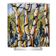 Birches Aglow By Prankearts Shower Curtain