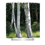 Birches On A Meadow Shower Curtain