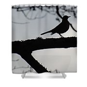 Bird At Dusk Shower Curtain