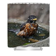 Bird Bath Fun Time Shower Curtain