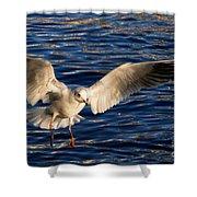 Bird Flying Shower Curtain