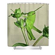 Bird Grasshopper Nymph Shower Curtain