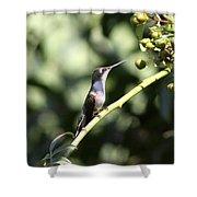 Bird - Hummingbird - The Observer Shower Curtain