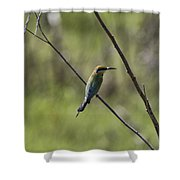 Bird Of Color Shower Curtain