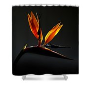 Bird Of Paradise 3 Shower Curtain