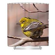 Bird - Pine Warbler - Detail Shower Curtain