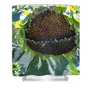 Bird Seed Shower Curtain