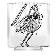 Bird Skeleton Shower Curtain