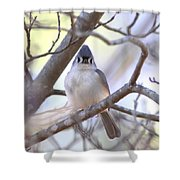 Bird - Tufted Titmouse - Busted Shower Curtain