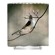 Bird - Tufted Titmouse - Wind Rider Shower Curtain