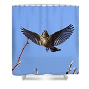Bird Vs Bug Shower Curtain