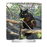 Birding  0052 Shower Curtain