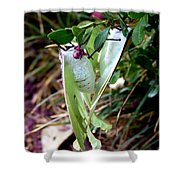 Birds And Bees And Luna Moths Shower Curtain