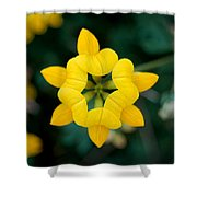 Bird's Foot Trefoil Shower Curtain
