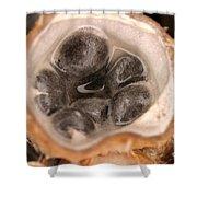 Birds Nest Fungus Shower Curtain