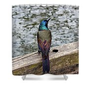 Birds Of A Feather Don't.. Shower Curtain