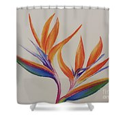 Birds Of Paradise II Shower Curtain