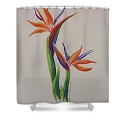Birds Of Paradise -in Love Shower Curtain