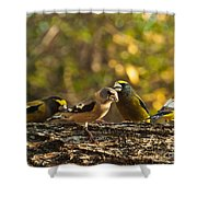Birds Of Yellow Shower Curtain