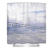 Birds On A Wire Pushed Shower Curtain