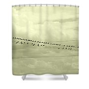 Birds On A Wire Tinted Shower Curtain