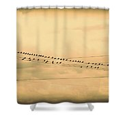 Birds On Wires Back In Time Shower Curtain