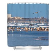 Birds Only Beach Shower Curtain