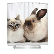 Birman Cat And Colorpoint Rabbit Shower Curtain