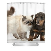 Birman Cat And Dachshund Puppy Shower Curtain