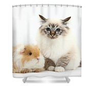 Birman Cat And Frizzy Guinea Pig Shower Curtain