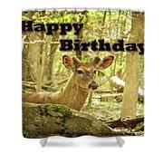 Birthday Greeting Card - Whitetail Deer Buck In Velvet Shower Curtain