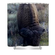 Bison At Ease Shower Curtain