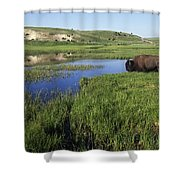 Bison At Edge Of Pool, Hayden Valley Shower Curtain