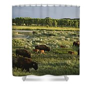 Bison Graze On Grasslands In The Park Shower Curtain