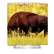 Bison In Field Shower Curtain