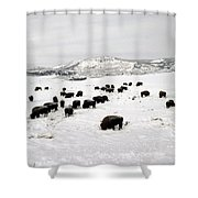 Bison Paw Away Snow With Head Shower Curtain