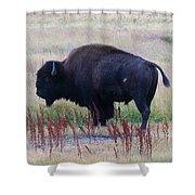Bison Shower Curtain
