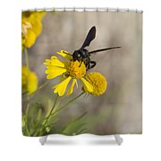 Bitterweed And Black Wasp Shower Curtain