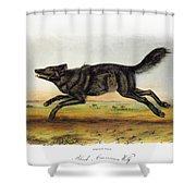Black American Wolf Shower Curtain