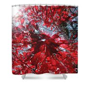 Black And Red Crescendo Shower Curtain