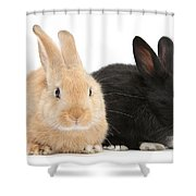 Black And Sandy Rabbits Shower Curtain