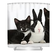 Black And Tuxedo Kittens With Dutch Shower Curtain