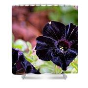 Black And Velvety Shower Curtain