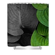 Black And White And Green Leaves Shower Curtain