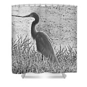Black And White Egret  Shower Curtain