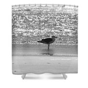 Black And White Gull Shower Curtain
