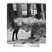 Black And White Hay Horse Shower Curtain
