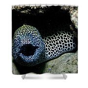 Black And White Honeycomb Moray Eel Shower Curtain